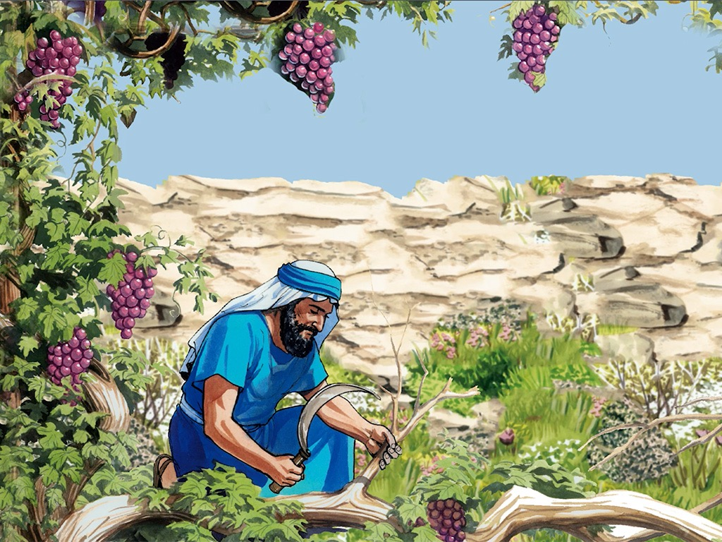 2_GNPI_088_Vine_Branches_1024