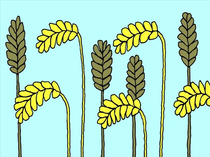 6_FB_LS_Wheat_Tares_1024